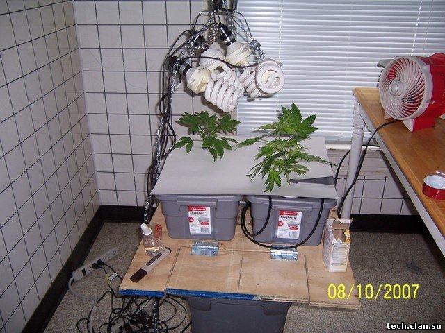 Гидропоники как сделать в домашних условиях